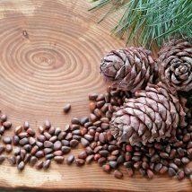 میوه درخت کاج ۱۰۰ گرمی عطارین