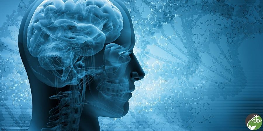 تقویت مغز به کمک گیاهان دارویی