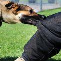 درمان طب سنتی برای زخم گاز سگ هار