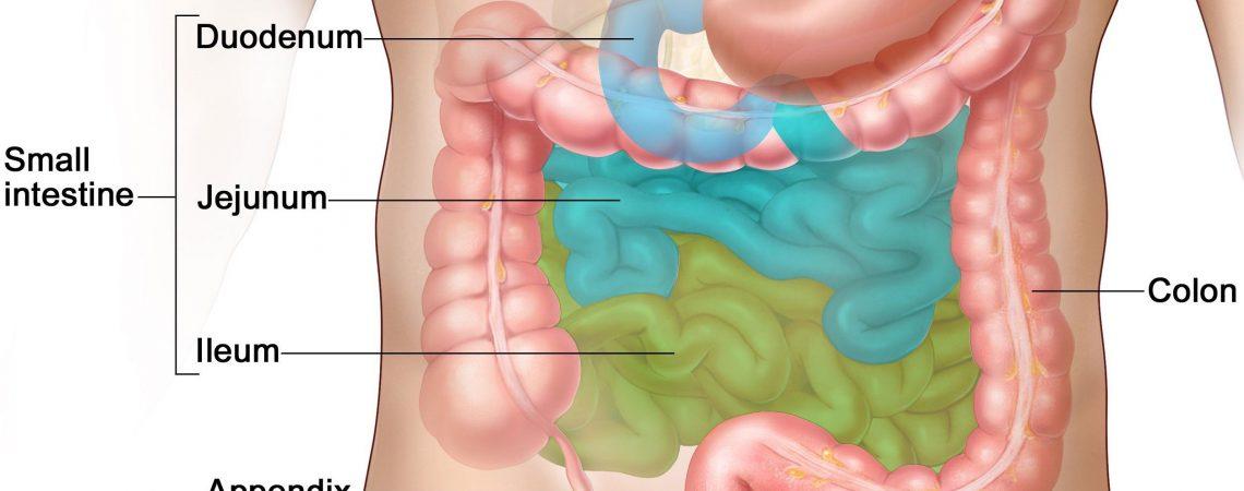 پیشگیری از انگل روده به کمک طب سنتی