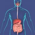 3 نسخه طب سنتی برای تقویت دستگاه گوارش