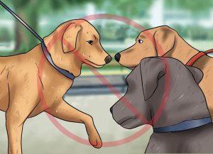 پیشگیری از ارتباط با سگ های دیگر