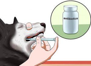 استفاده از آنتی بیوتیک