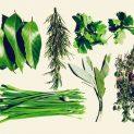 رادیو عطارین | روش تهیه قطران گیاهی