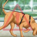 چگونه از ابتلا سگمان به ویروس کرونا پیشگیری کنیم؟