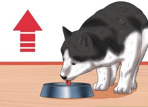 تامین آب بدن سگ