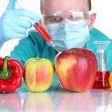 محصولات دستکاری شده ژنتیکی و تاثیر منفی آن بر سلامت انسان