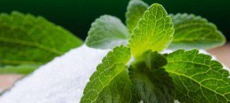 معرفی گیاه دارویی استویا یا شیرین برگ