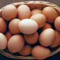 معرفی و آشنایی با مضرات تخم مرغ