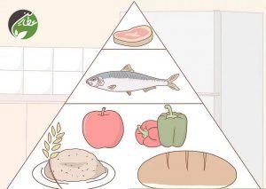 انتخاب رژیم غذایی مناسب