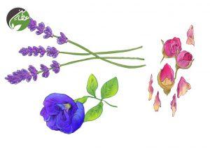 گل و گیاهان قابل استفاده