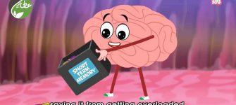 انیمیشن آموزشی کودکان – چرا فراموش می کنیم؟