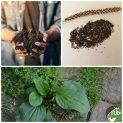 پکیج کاشت گیاه دارویی بارهنگ