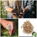 پکیج کاشت گیاه دارویی زیره سبز