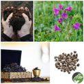 پکیج کاشت گیاه دارویی گل گاوزبان ایرانی