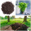 پکیج کاشت گیاه دارویی بادرنجبویه (ملیس)