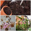 پکیج کاشت گیاه دارویی گل ختمی ( رنگی )