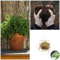 پکیج کاشت گیاه دارویی آویشن ولگار ( باغی )
