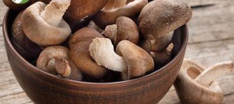 چگونه در خانه قارچ شیتاکه پرورش دهیم؟ (قسمت اول)
